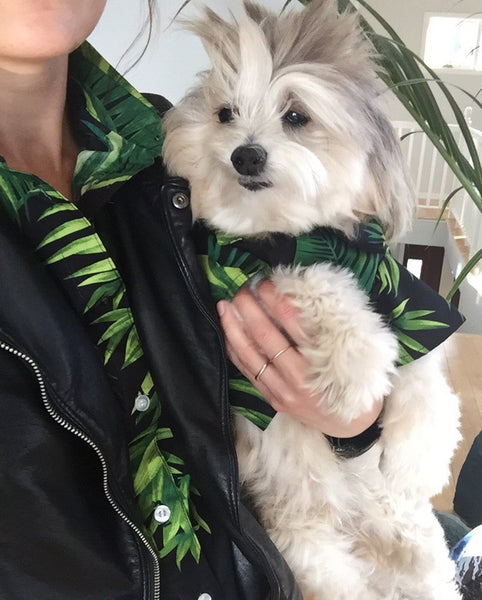Matching Hawaiian Print Shirts for Dogs & Humans by Squad Style
