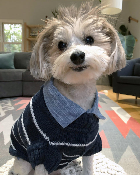 Matching Stripe Sweaters for Dogs and Humans by Squad Style