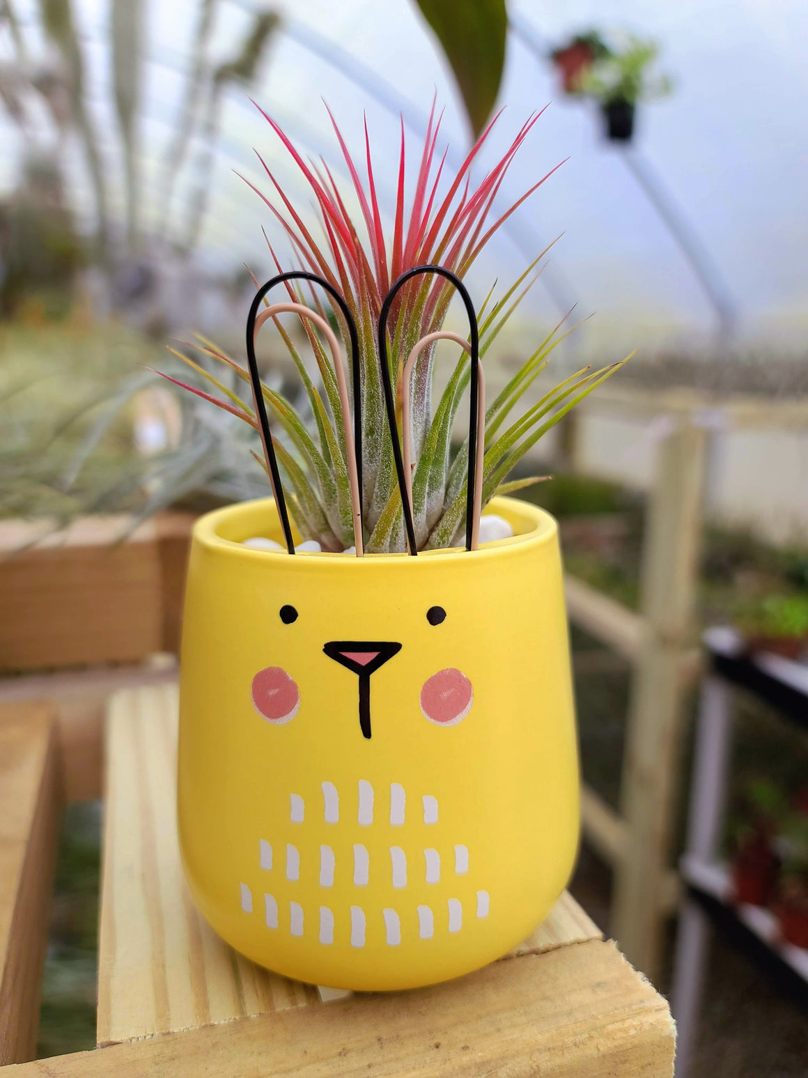 Yellow Bunny Holder with Airplant