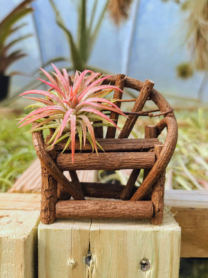 Wicker Bench Holder with Airplant