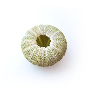 Green Urchin Air Plant Holder
