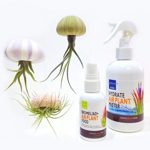 3 Hanging Air Plant Jellyfish + 2 oz Fertilizer + Mister
