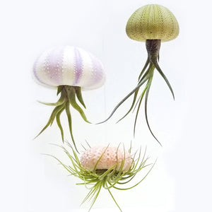3 Hanging Air Plant Jellyfish