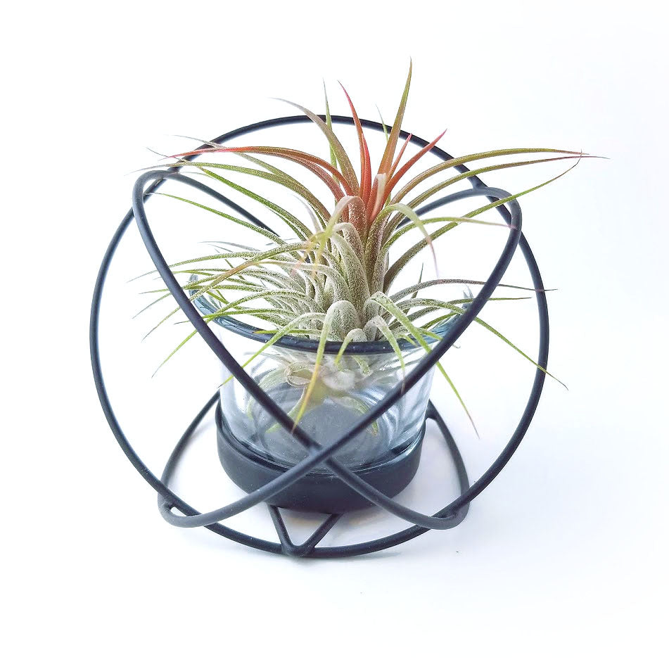 Round Geometric Air Plant Holder with Plant
