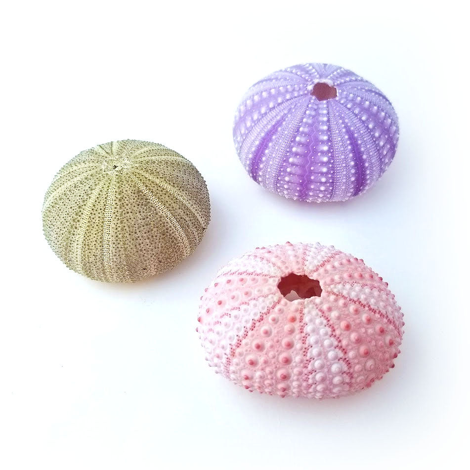 Urchin Air Plant Holder Trio