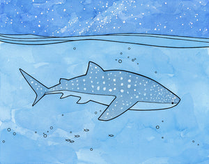 Marokintana, a new Whale Shark illustration