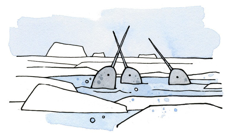 Narwhals for kids