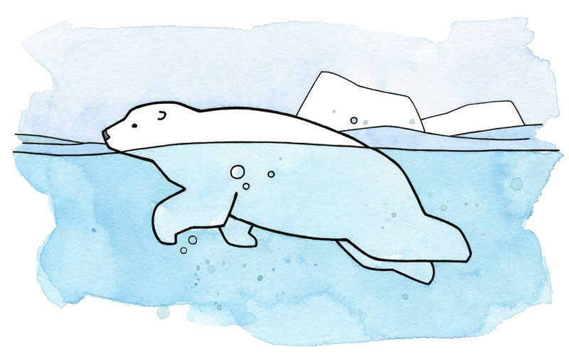 polar bear swimming illustration