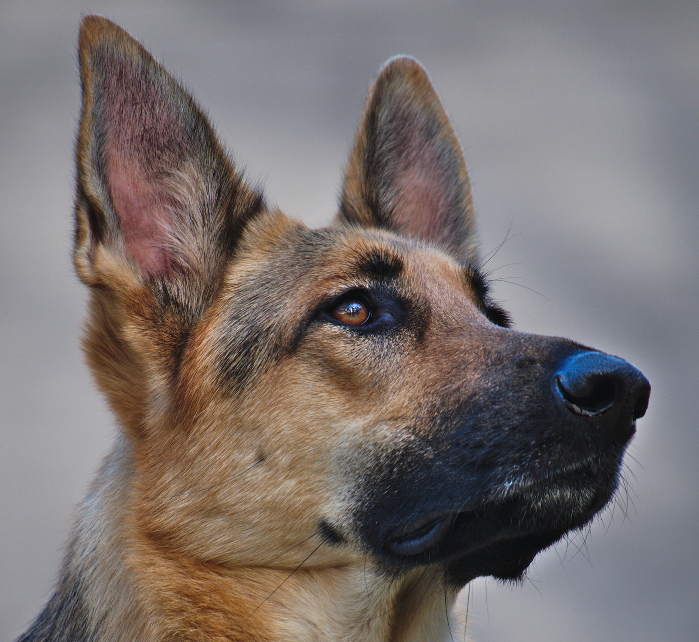 Prepared Physician's Monthly Pearl of Wisdom for May 2021 Dog Ears