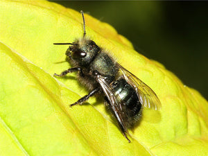 Remaining mason bee pick up events!