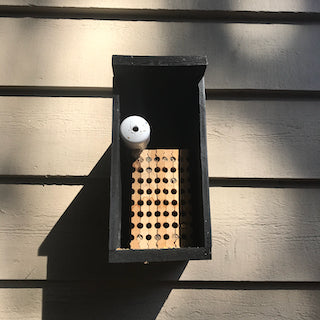 How to Store & Return Your Mason Bee Nesting Block