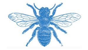 Amazing facts about mason bees