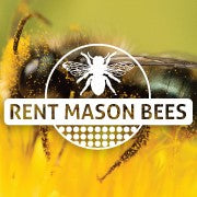 MASON BEES ARE BELLY FLOPPERS AND POLLINATE 95% OF THE FLOWERS THEY FLOP ON