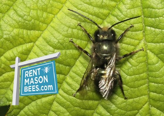 Rent Mason Bees Gift Card