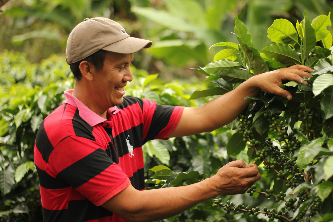 Farmer Feature: Eraldo Garcia of COMSA