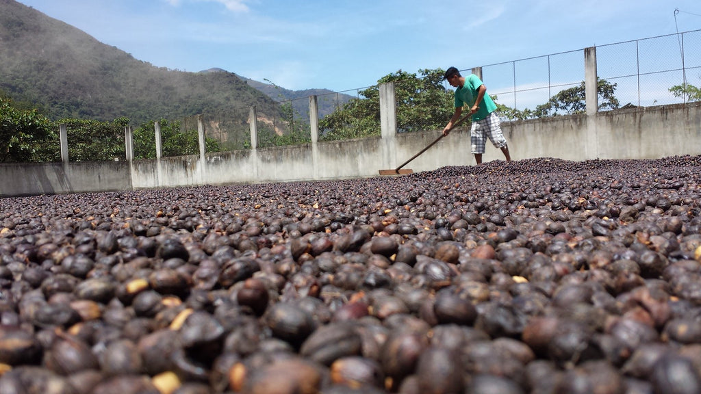 Natural Process Coffee: Good for the World and Tasty for Us