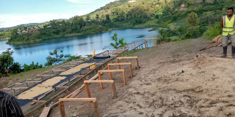 Coffee drying beds on the shores of Lake Kivu