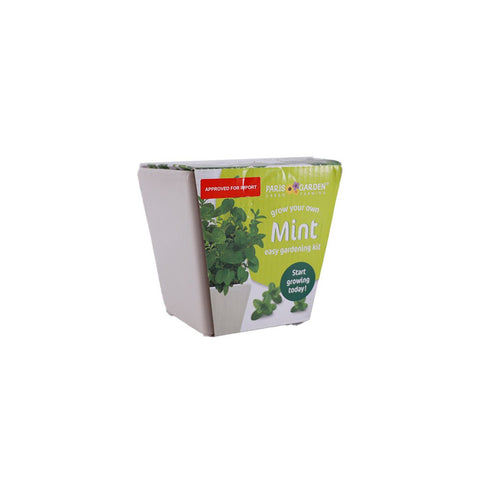 Grow Your Own Mint Plant Decor Klosh Gifts Online Singapore