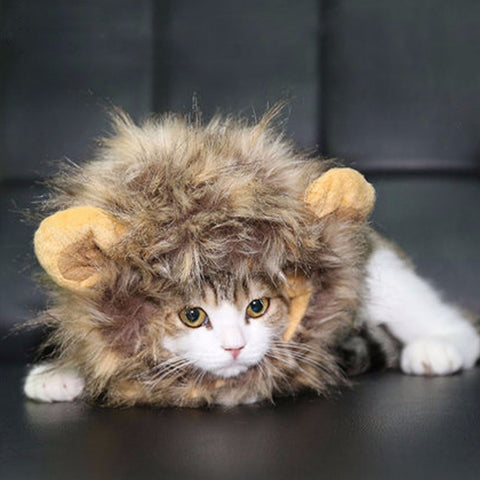 Lion Hair for Cats