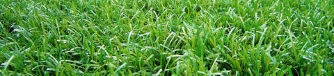 Artificial Grass Special Clearance
