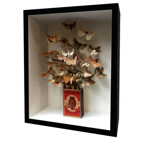 Framed Art Butterfly Box Owl Brand Butterfly's