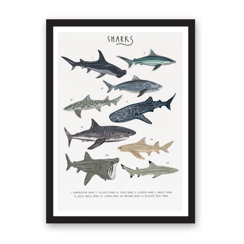 Print featuring an illustration of 9 different types of shark.