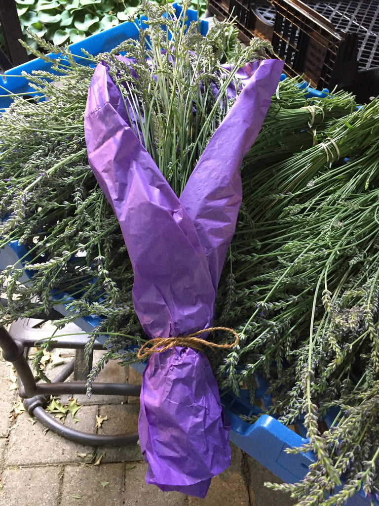 Fresh Cut Lavender Bundles - Thompson Street Farm LLC, microgreens,