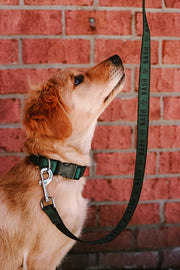 NASH Dog Leash [Olive/Black]