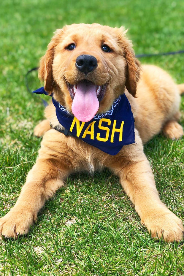 Navy/Gold NASH Bandana
