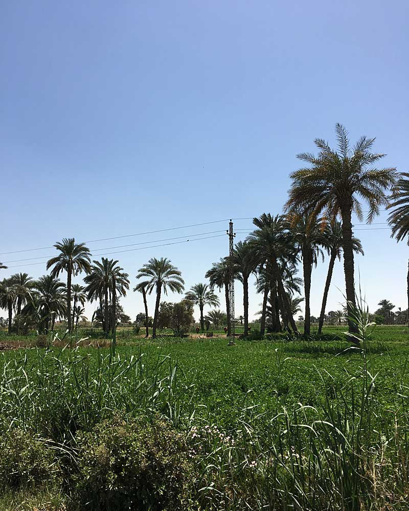 my-visit-to-the-charming-fayoum-pottery-school-pomegranate-blog-palm-trees