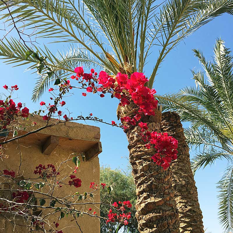 my-visit-to-the-charming-fayoum-pottery-school-pomegranate-blog-palm-tree