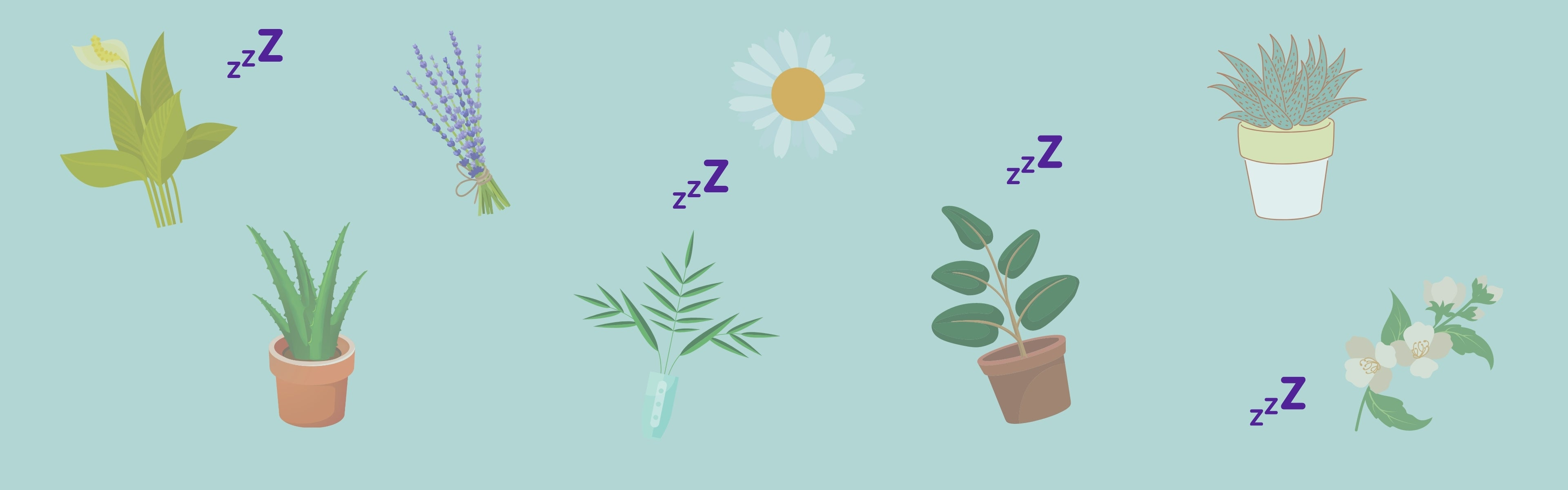 Plants that can help you sleep
