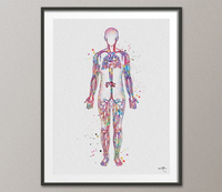 Blood Vessels Watercolor Print Circulatory System Human Veins Human Anatomy Medicine Art Cardiovascular Clinic Wall Art Medical Art-653 - CocoMilla