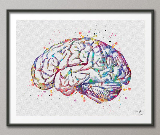 Brain Anatomy Watercolor Print Medical Art Science Art Graduation Gift Anatomy Neurology Human Brain Nurse Science Poster Psychological-972 - CocoMilla
