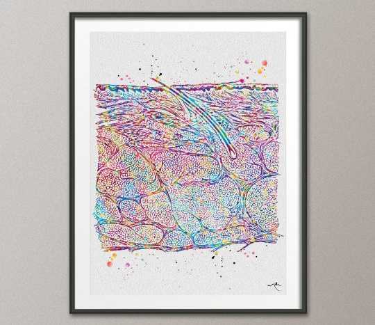 Cross Section of the Skin Watercolor Print Epidermis Histology Dermatology Art Skin Cell Medical Art Dermatologist Gift Clinic Decor-1159 - CocoMilla