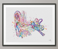 Ear Anatomy Watercolor Print Audiologist Gift Audiology Poster Science Art Ear Diagram Ear Poster Anatomical Office Decor Medical Art-1138 - CocoMilla