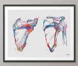 Scapula and Clavicle Shoulder Bones Watercolor Print Human Body Anatomy Medical Art Physiotherapists Chiropractic Skeletal Orthopedic-1223 - CocoMilla