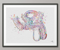 Male Reproductive Anatomy Watercolor Print Human Organs Anatomical Penis Clinic Decor Art Student Urology Medical Art Nurse Doctor Art-1211 - CocoMilla