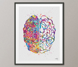 Brain Anatomy Circuit Board Watercolor Print Science Art Computer Art Neurology Human Brain Engineer Gift Brain Science Poster Wall Art-1110 - CocoMilla