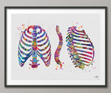 Ribcage and Spine Watercolor Print Human Spine Anatomy Art Medical Art Neurology Neurosurgeon Neurologist Wall Art Doctor Clinic Office-381 - CocoMilla