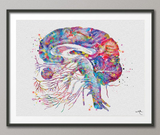 Brain Cranial Nerves Watercolor Print Medical Art Cabinet Neurologist Office Wall Art Neurology Human Brain Neuroscience Wall Hanging-173 - CocoMilla