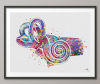 Ear Anatomy Watercolor Print Middle Ear Art Audiologist Gift Audiology Art Science Art Ear Diagram Clinic Decor Vestibule Medical Art-248 - CocoMilla