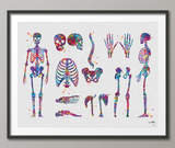 Skeletal System Watercolor Print Human Body Anatomy Art Medical Art Medicine Skull Art Wall Hanging Graduation Gift Clinic Decor Gift-1025 - CocoMilla