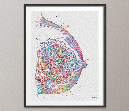 Breast Anatomy Watercolor Print Mammary Gland Medical Art Breast Cancer Medical Office Decor Female Reproductive System Art Doctor Gift-376 - CocoMilla