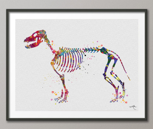 Dog Skeleton Watercolor Print Dog Skeletal System Art Print Poster Dog Breed Gift Pet Dog Love Puppy Animal Veterinary Office Dog Poster-826 - CocoMilla