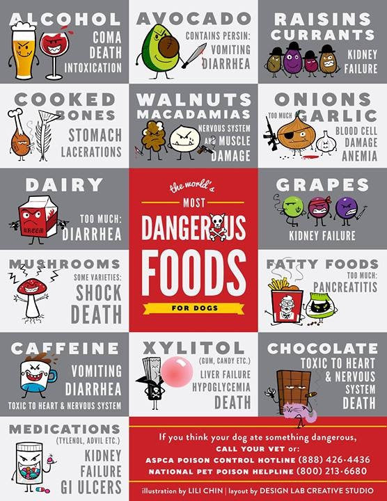 Dangerous Food for your dog