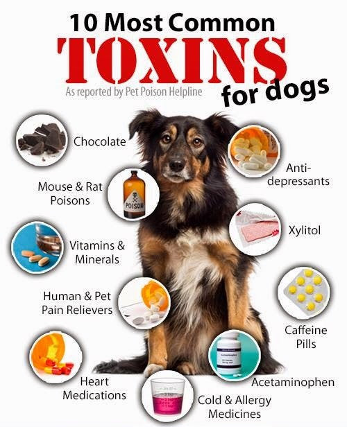 Top Dog Poisons Famous Skin Care