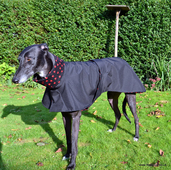 Greyhound Chi Chi Raincoat Cotton Lined
