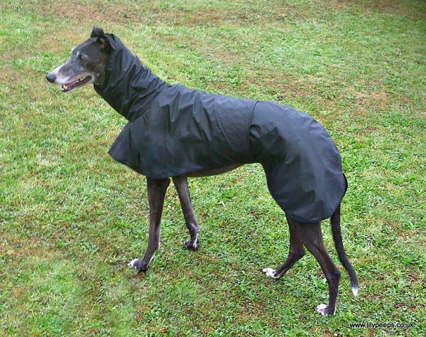 Greyhound Shower Mac with Hood -  - 2