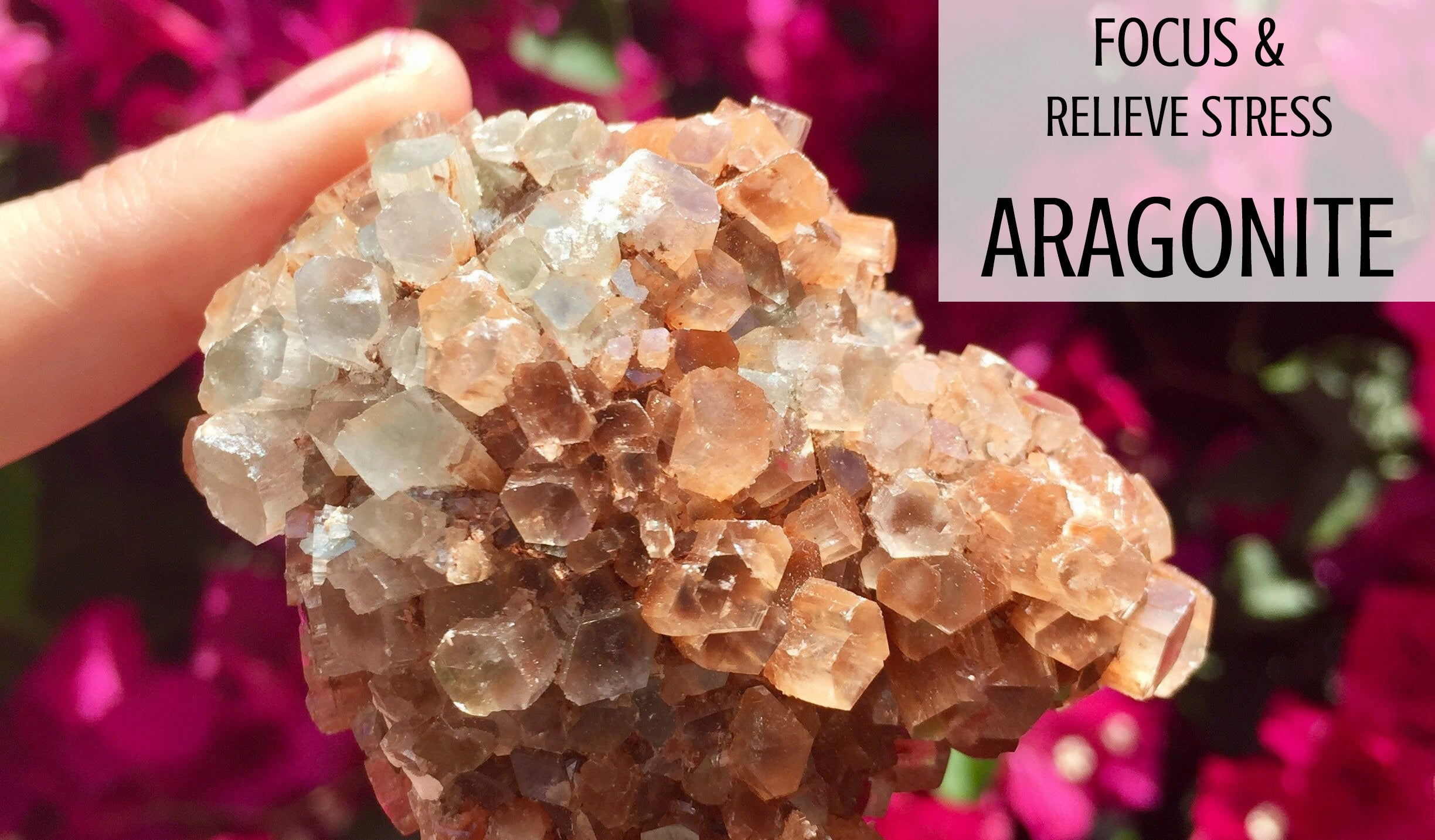 Intro to Wellness: Aragonite